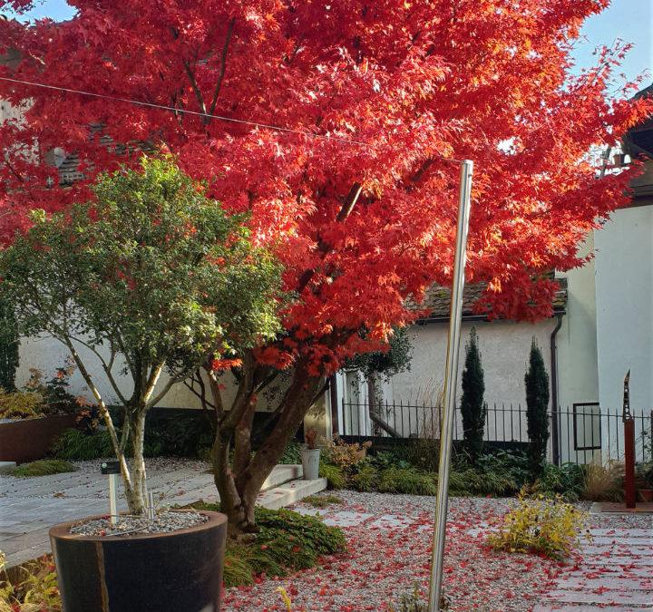 Herbstliche Impressionen aus unserem Skulpturengarten